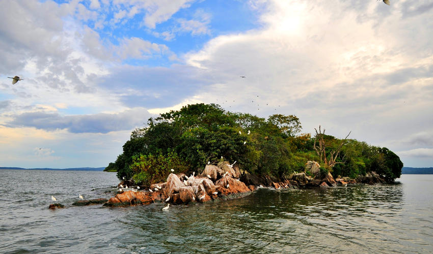 Rubondo-Island-National-park